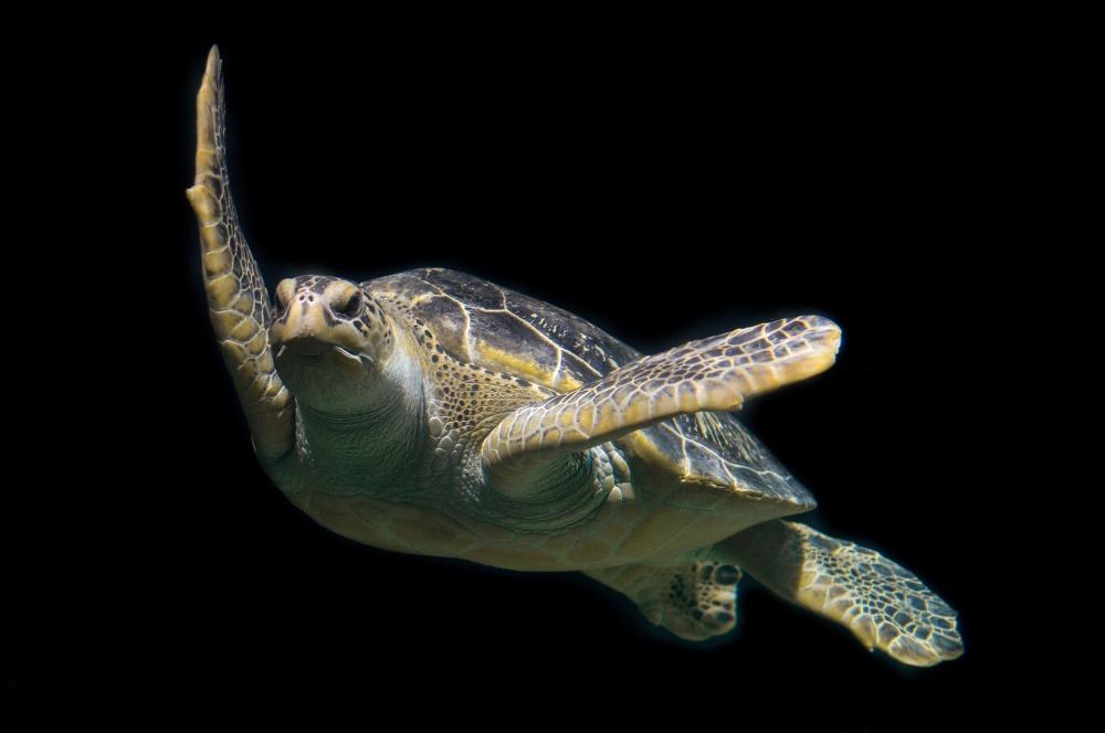turtle-1593875_1920 (1)
